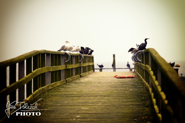 Birds on the wooden landing state