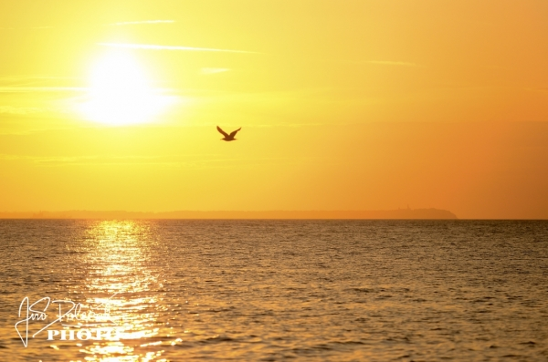 Seagull with ray of sun on the sunset